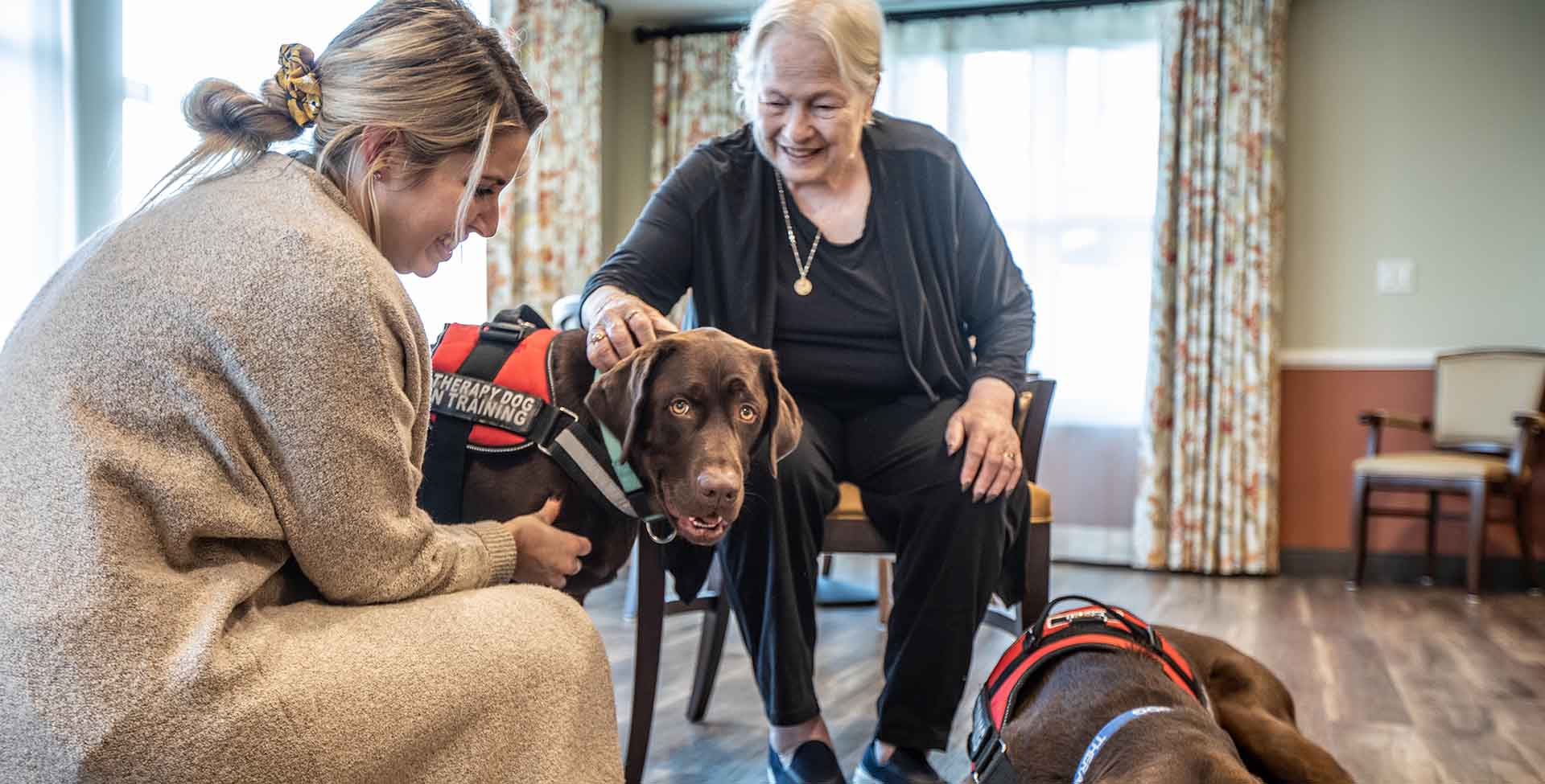 senior dog therapy