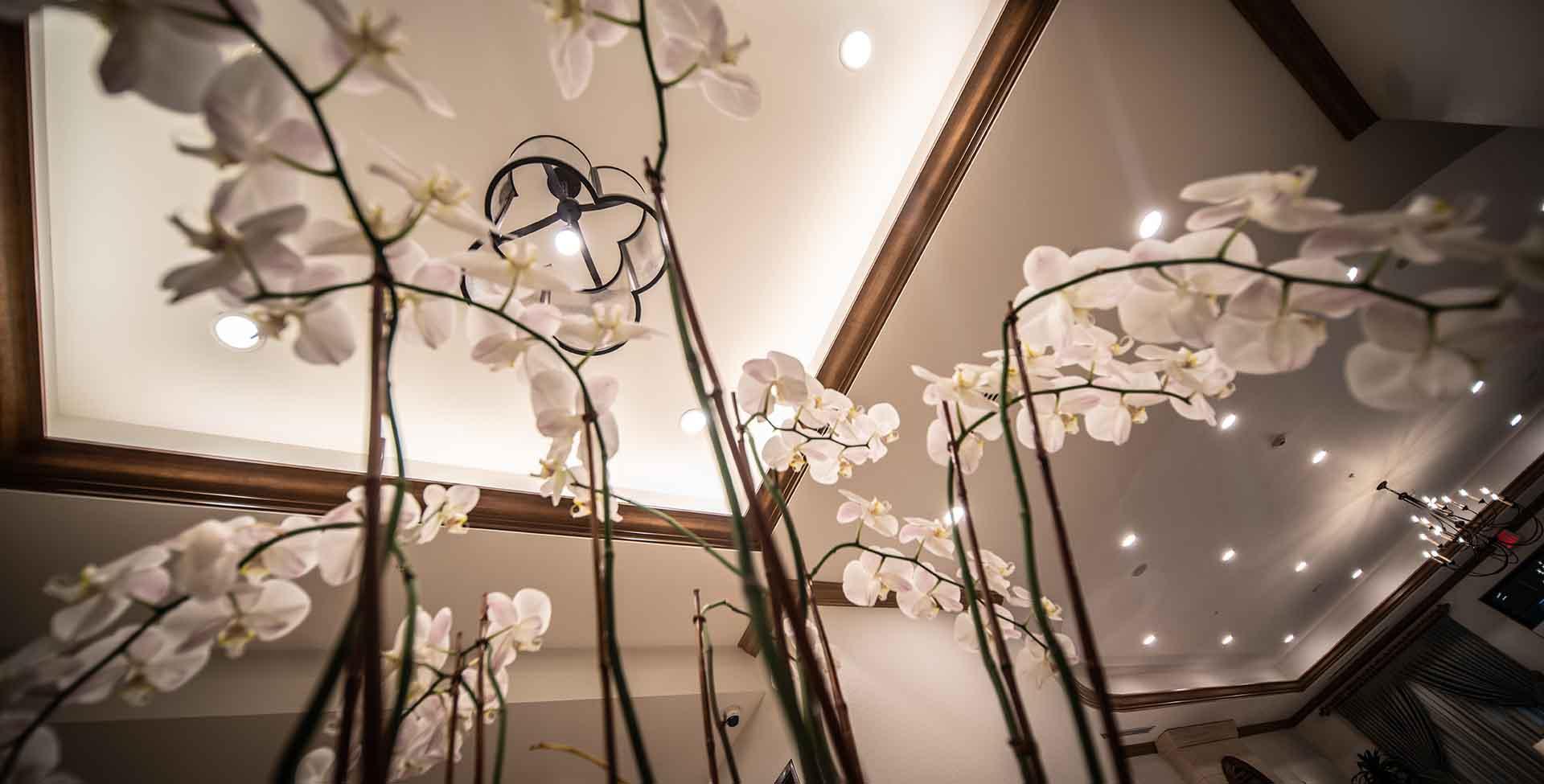 interior orchids